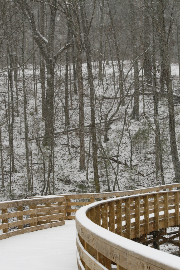 snow day-007
