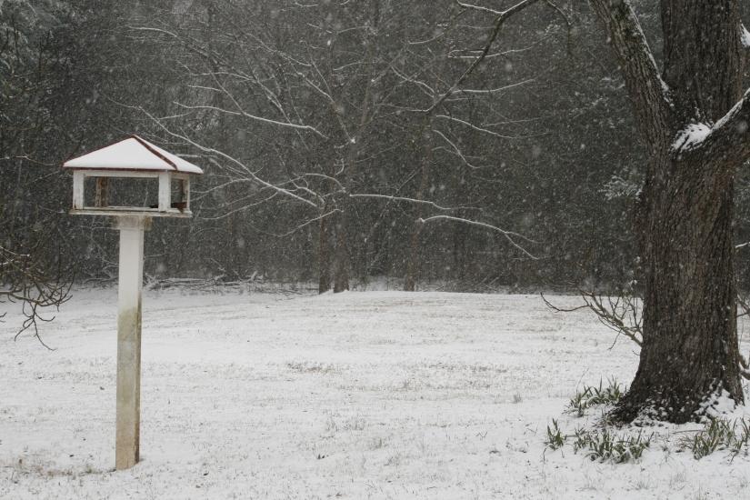 snow day-010